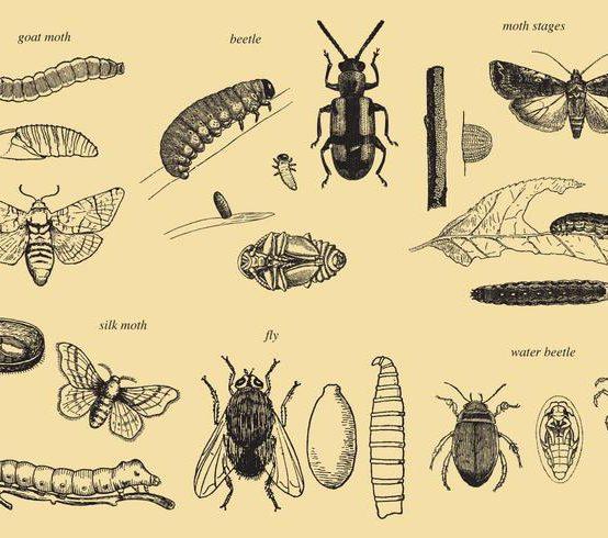 B.Sc. Zoology